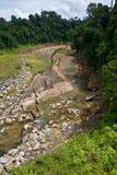 两个密林河岩石sid被撒布的结构树 免版税库存图片