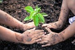 两个小女孩递一起种植在黑土壤的年轻树 库存照片