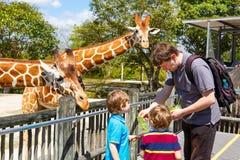 两个小孩男孩和父亲观看的和哺养的长颈鹿  免版税库存图片