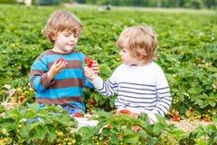 两个小朋友获得在草莓农场的乐趣在夏天 免版税库存照片
