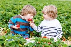 两个小朋友获得在草莓农场的乐趣在夏天 库存照片