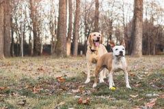 两个愉快的狗朋友 皇族释放例证