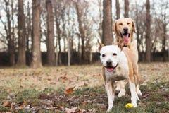 两个愉快的狗朋友 库存图片