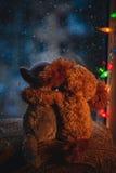 两个拥抱的爱恋的朋友猫和拥抱坐窗台的狗玩具,看在窗口 在下雨之外 圣诞节 图库摄影