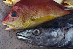 两个新鲜的海鱼在背景油布的待售:与蓝眼睛和开放嘴的红顶,与长的灰色底下下颌 免版税图库摄影