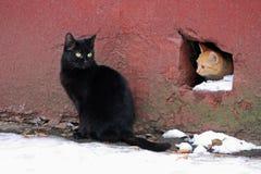 两个无家可归者猫 库存照片