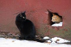 两个无家可归者猫 免版税库存图片