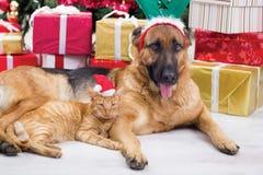 两个最好的朋友狗和猫在圣诞夜 免版税库存图片