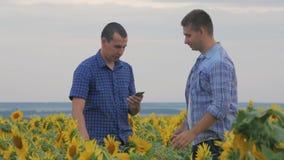 两个朋友农夫蓄牧者,滑稽在向日葵领域的情况附近 伙伴分析向日葵领域的农夫人 股票录像
