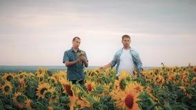两个朋友农夫蓄牧者,滑稽在向日葵领域的情况附近 伙伴分析向日葵领域的农夫人 股票视频