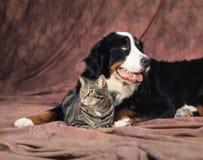 两个朋友 库存图片