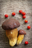 两个杉木牛肝菌(牛肝菌蕈类pinophilus)蘑菇顶视图装饰用红色花楸浆果结果实 免版税库存图片