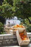 两个条板箱箱子用桔子和在路的橙树 免版税库存图片