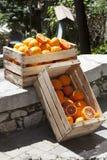 两个条板箱箱子用桔子和在路的橙树 免版税库存照片