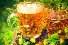 两个杯子啤酒木树干 免版税图库摄影
