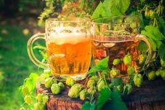 两个杯子啤酒木树干 库存图片