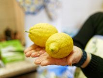 两个柠檬在手上 库存照片