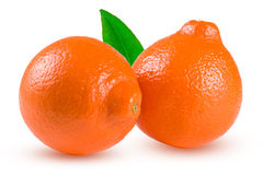 两个桔子蜜桔或Mineola与叶子在白色背景 库存图片