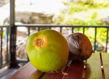 两个椰子绿化在游廊平房桌晴朗的早晨早餐的棕色坚果果子 免版税库存图片