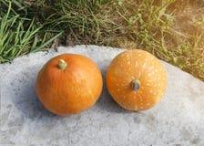 两个橙色南瓜在庭院里在秋天 免版税图库摄影