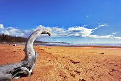 两个海岸干燥日志海洋美丽如画的结&# 库存图片