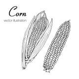 两个玉米剪影的传染媒介例证 库存照片