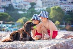 两个甜孩子,男孩,使用与在海滩的狗 库存图片