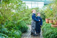 两个男孩兄弟朋友获得乐趣在温室 杜娟花冬景花园 孩子和家庭 库存照片