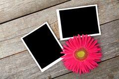 两个空白的照片框架和新鲜的桃红色花 免版税库存图片