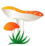 两个红色飞行伞菌,在白色背景 免版税库存照片