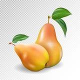 两个绿色成熟梨的照片拟真的传染媒介例证与绿色叶子的 库存照片