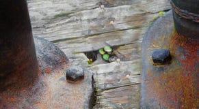 两个老螺栓要求对一个木基地的一个生锈的金属结构 免版税库存照片