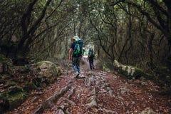 两个背包徒步旅行者步行在童话森林里 免版税库存照片