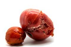 两个腐烂的蕃茄 免版税库存图片