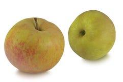 两个苹果在白色背景隔绝的Reinette 库存照片