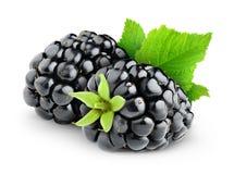 两个被隔绝的黑莓 免版税库存照片