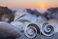 两个贝壳在海和日落的背景卷曲在黄昏 免版税库存照片