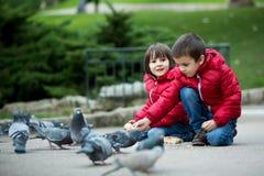 两个逗人喜爱的孩子,男孩兄弟,哺养的鸽子在公园 免版税库存照片