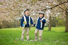 两个逗人喜爱的孩子,男孩兄弟,走在春天樱桃blos 库存照片