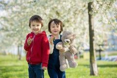 两个逗人喜爱的小孩,男孩兄弟,吃在的草莓 图库摄影