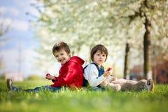 两个逗人喜爱的小孩,男孩兄弟,吃在的草莓 库存图片
