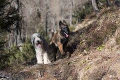 两个逗人喜爱的狗朋友 免版税库存照片