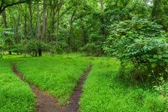 两个道路森林地 库存图片