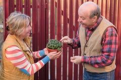 两个邻居看在罐的新的植物的男人和妇女 免版税库存照片