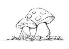 两个飞行的蘑菇在秋天 库存照片