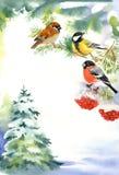 两个鸟和红腹灰雀在多雪的分支 免版税库存照片