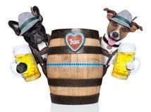 两个巴伐利亚人狗 免版税库存照片