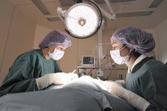两位兽医外科医生在手术室 库存照片