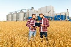 两位农夫在与片剂的一块麦田站立 农艺师与五谷谈论收获和庄稼在麦子的耳朵中 免版税库存照片