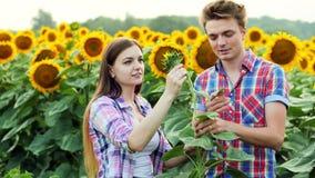 两位农夫检查收获、男人和妇女耕地球形的,谈话在向日葵的领域 影视素材
